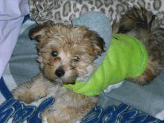 Teddy in his winter hoody