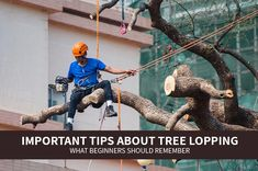 In many cases, cutting away a few branches can help to keep the tree growing healthily. If you'd like to cut your own tree, below are important tips about tree lopping that are worth remembering for those who are new to the job. Tree Lopping, Growing Tree, Branches, Cases, Learning, Tips, Studying, Teaching, Eggplant
