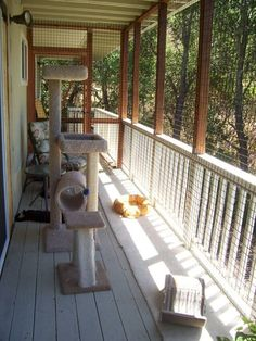 An enclosed deck just for the kitties