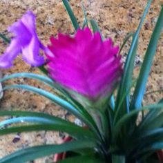 My plant
