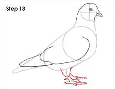 How To Draw A Pigeon Diy Card Ideas Drawings Bird Drawings Pigeon
