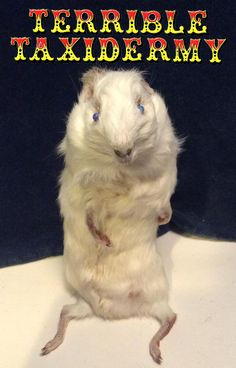 Terrible Taxidermy! The only shop to stock creations like this...