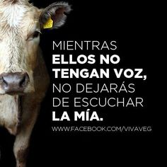 For the rights of animals. Animal Law, Amor Animal, Why Vegan, Vegan Vegetarian, How To Become Vegan, Vegan Quotes, Food Gallery, Stop Animal Cruelty, Vegan Animals
