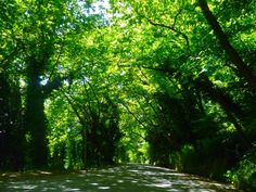 lost and found in pelion Founded In, Lost & Found, Greece Travel, Pathways, Lush, Country Roads, Trees, Earth, Mountains