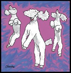 The Poodle Bounce! Neo does this sooo good. He loves to dance and it actually looks like he is doin' the jitterbug!!