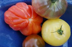 The tomatoes have antioxidant qualities similar that those in dark purple fruits like blueberries and blackberries — fruits that are purportedly cancer fighters! Purple Fruit, Cancer Fighter, Food System, Food News, Blackberries, Dark Purple, New Recipes, Tomatoes, Blueberry