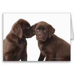 Two chocolate Labrador Retriever Puppies Note Cards.  $3.15