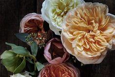 Kari Herer's Elegant Floral Portraits