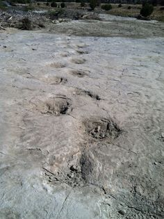 Fossilized dinosaur tracks, Picket Wire Canyon