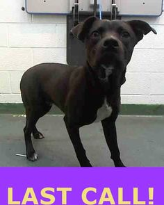 JESTER (A1677607) I am a male black Terrier mix. The shelter staff think I am about 3 years old. I was found as a stray and I may be available for adoption on 02/09/2015. — hier: Miami Dade County Animal Services. https://www.facebook.com/urgentdogsofmiami/photos/pb.191859757515102.-2207520000.1423598078./923004131067324/?type=3&theater