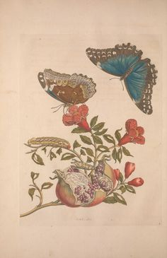 https://www.flickr.com/photos/biodivlibrary/8506177815/sizes/l