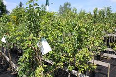 Zet fruitbomen altij