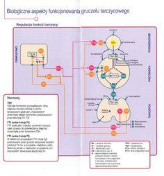 Biologiczne aspekty funkcjonowania gruczołu tarczycowego