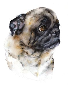 What a gorgeous Pet portrait of a pug painted by watercolour artist Jane Davies Art Watercolor, Watercolor Animals, Watercolor Portraits, Art Jokes, Pug Art, Pug Life, Dog Portraits, Animal Paintings, Jane Davies