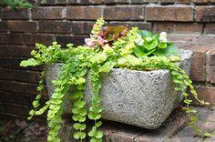 Hypertufa... I mainly like the idea of a Gina concrete planter like this