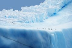 Penguin City Photo by Christian Wilkinson -- National Geographic Your Shot