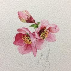 1878 Likes 12 Comments Today is a gift! Watercolor Cards, Watercolor Flowers, Watercolor Paintings, Watercolors, Drawing Flowers, Cherry Blossom Watercolor, Watercolor Portraits, Watercolor Landscape, Abstract Paintings