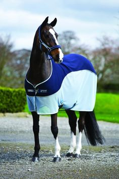 My horses need more clothing options than I do! Country and Stable of Olney Limited - Rambo Sports Cooler, £63.95 (http://www.countryandstable.co.uk/rambo-sports-cooler/)