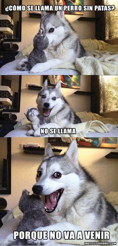 Tu día va a mejorar infinitamente cuando leas estos chistes contados por un husky.