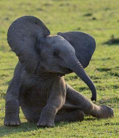 #TooCute #Elephant #Animals #BroomMillFarm