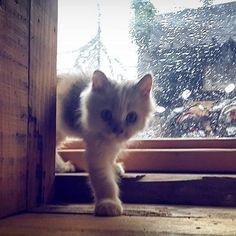 Hujan itu saatnya delik'an  # #furnichers #missygirl #catslovercatsoftheday #catsofinstagram #catstagram #instacat #catsdiary #diarykucing #catslovers