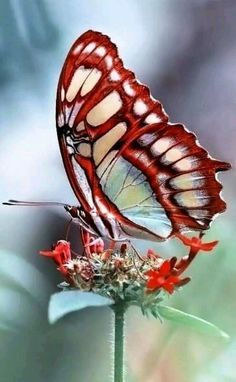 Beautiful butterfly.. - Narendra Padhiyar - Google+