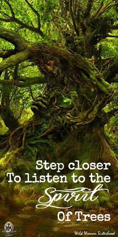 Step closer to listen to the Spirit of trees.. WILD WOMAN SISTERHOOD™…(Pinner suggest to Copy the picture and hang it on a Wall!
