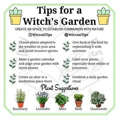 Witchcraft Books, Green Witchcraft, Wiccan Witch, Wiccan Magic, Magick Spells, Magic Herbs, Herbal Magic, Witchy Garden, Witch Herbs
