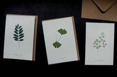 New in! Greeting cards Ash Fern and Gingko. #print #greetingcards #kort #lekioskshop #lekiosk #stationery by lekioskshop