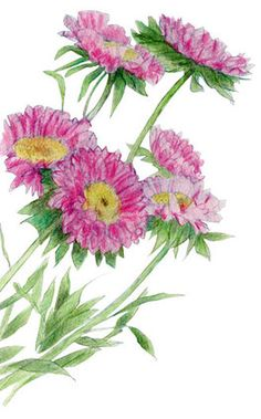 Pink Flowers :: colored pencil :: Mariana Musa