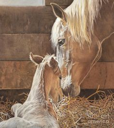 Newborn Foal Drawing - The New Arrival Is Here by Helen Bailey