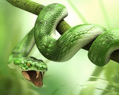 Wallpaper Green Snake is the best high-resolution wallpaper image in You can make this wallpaper for your Desktop Computer Backgrounds, Mac Wallpapers, Android Lock screen or iPhone Screensavers 3d Wallpaper Green, Snake Wallpaper, Lion Wallpaper, Full Hd Wallpaper, Animal Wallpaper, Wallpaper Backgrounds, Car Wallpapers, Snake Images, Snake Photos