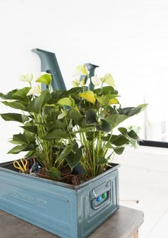 Een magazijnbak gebruikt als plantenbak!