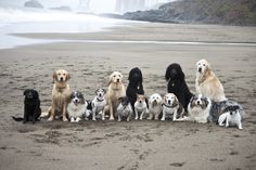 "One of our Pack Walks at Baker Beach Posing for a pic ""Come LIKE US on Facebook at ""The Love of Dogs""  and see our daily pics to put a smile on your face and joy in your heart."