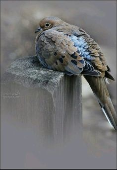 """Contentedly Perched.""     By: Robert Youlet Photography."