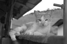 Um gato me encarando em Coroaci (MG)