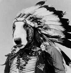 Native #BullTerrier #English #Bull #Terrier #Dog #DogCostume #FunnyDog #HalloweenCostume