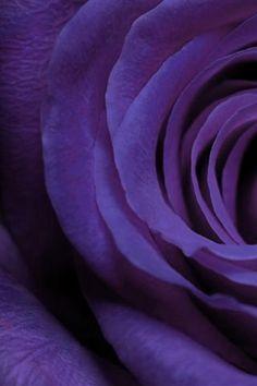 Purple ✿⊱╮Mirtha Aguilera