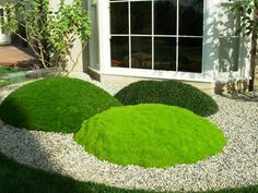 These domed mounds of Irish moss, Scottish moss and green dwarf mondo grass appear in a Japanese-style gravel garden in Southern California.