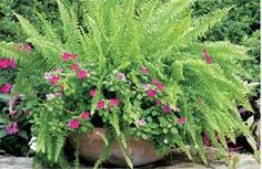 Best Flowers for Shade Gardens | Shade Flowers & Foliage | Bloom IQ