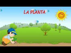 Primero de Básica: Partes de la planta - YouTube
