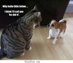 Big cat and small dog - Funny Pictures