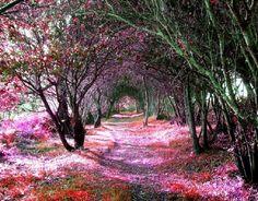 Tree Tunnel, Sena de Luna, Spain - flowers, path, trees, nature, sun, warm, forest, beautiful, tunnel