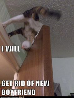 Lolcats                                                Lolcats n' Funny Cat Pictures                            Submit                            Create                                                                                            Follow