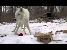 Atka: BarkBox Enrichment