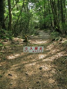 Eerie Images From Japan's Suicide Forest
