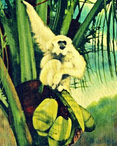 Animal photograph MONKEY JUNGLE 11x14 16x20 retro tropical Florida roadside attraction color  gibbons print kid's wall art Rockhouse charity on Etsy, $44.00