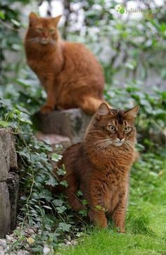Juliane Meyer, photographer - Cats and Dogs House Pretty Cats, Beautiful Cats, Animals Beautiful, Warrior Cats, Cool Cats, I Love Cats, Animals And Pets, Cute Animals, Orange Cats
