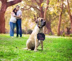 This Pregnant Couple Did A Perfect Photo Shoot After Being Told To Give Up Their Dogs Pregnant Dog, Pregnant Couple, Fall Maternity Photos, Maternity Pictures, My Pregnancy, Pregnancy Photos, Human Babies, Fur Babies, Black And White People