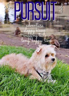 In Pursuit Of- A Wild Day Out With Nora The Morkie #NaturalBalance #wildPursuit #sponsored